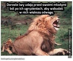 Co te lwy?