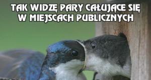 Tak widzę pary całujące się w miejscach publicznych