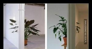 Rośliny w biurze Bethesdy