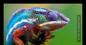 Sam fakt, że wiemy o istnieniu kameleonów