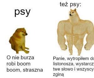 Pies psu nierówny