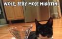 Wolę, żeby moje Miautini
