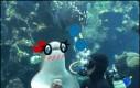 Podwodny senpai
