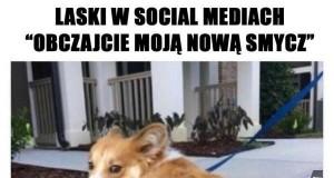 Laski w social mediach takie są