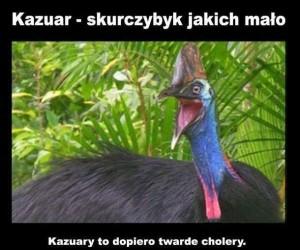 Skurczybyk kazuar