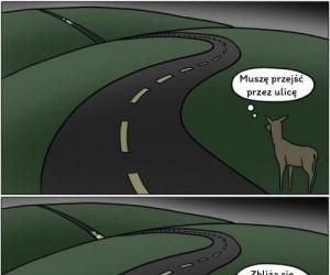 Logika mieszkańców lasu