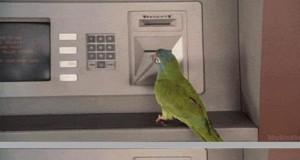 Papuga w bankomacie