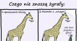 Czego żyrafy nie znoszą...