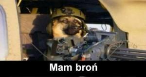 Dlaczego nie biorą psów do wojska