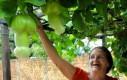 Perwersyjne owoce