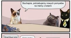 Nowe memy z kotami
