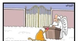 Kocie życia