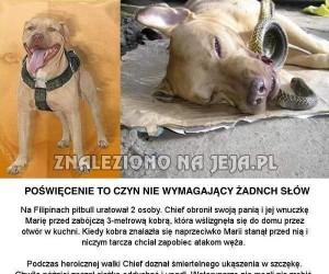 Psi bohater