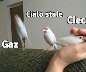 Ptasio ma 3 stany skupienia