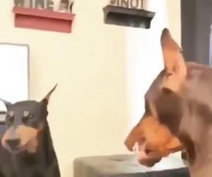 Hej! Nie bijcie się!