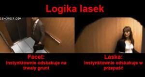 Logika lasek