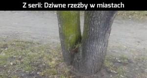 Przecięte jabłko w Ostrowie