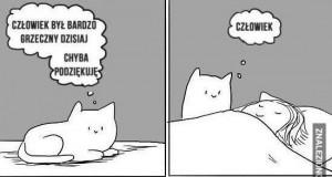 Miły kotek
