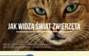 Jak widzą świat zwierzęta