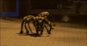 Strzeżcie się Spiderdoga!
