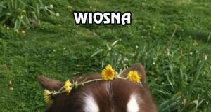 Wiosna - też ją czujesz?
