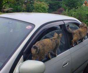 Zwinne koty