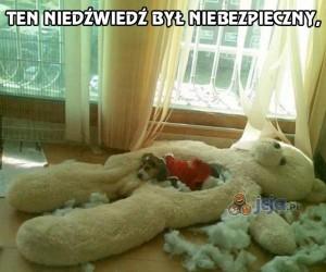 Mój pies zabił niedźwiedzia