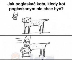 Jak pogłaskać kota kiedy on nie chce?