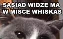 Kot Janusza
