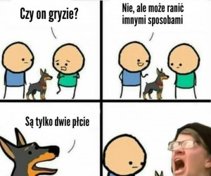 Uwaga, zły pies!