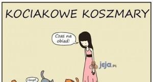 Kociakowe koszmary