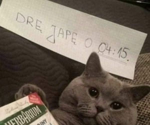 Kotki są słodkie