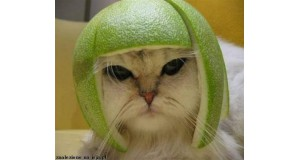 Kot w hełmie