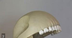 Szkielet Pac-Mana
