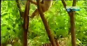 To jest dopiero prawdziwy król dżungli