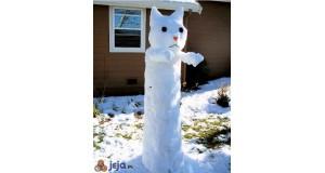 Długi kot ze śniegu