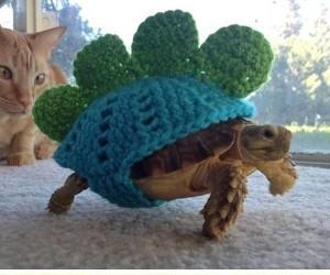 Żółwie w ubraniach na miarę