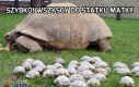 Go go power turtles!