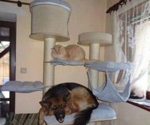 Jakiś dziwny ten kot