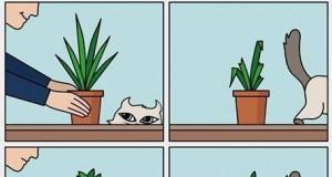 Kotek i roślinki