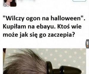Wilczy ogon