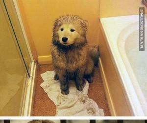 To mój psiak