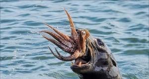 Uwolnić Krakena