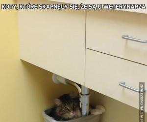Koty, które skapnęły się, że są u weterynarza