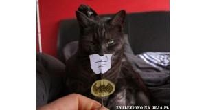Koci batman