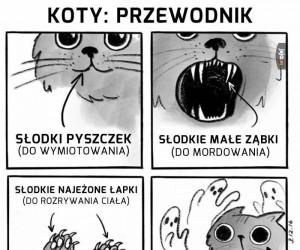 Charakterystyka kota