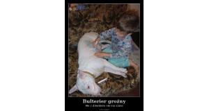 Bulterier groźny