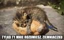 Kociak i ziemniaczek
