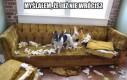 Pies który  spanikował