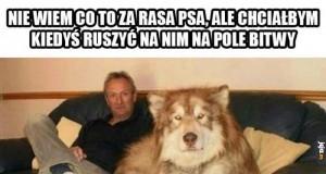 Pies bojowy